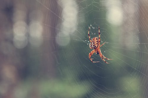 Free stock photo of forest, spider, spider web, spider's web