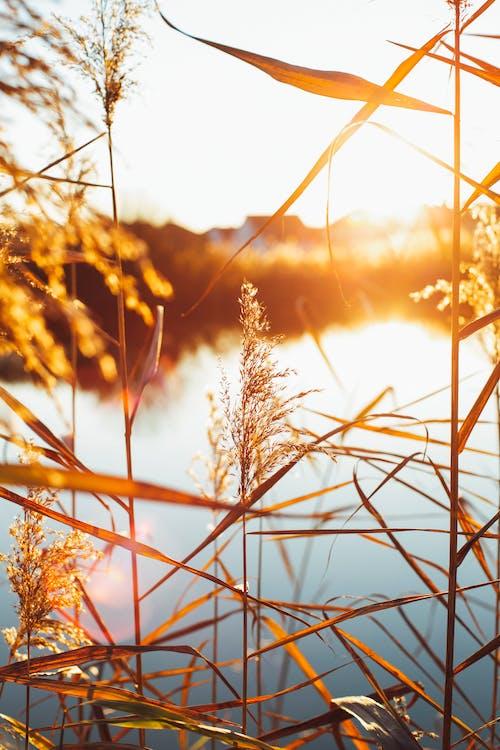 Δωρεάν στοκ φωτογραφιών με macro, εργοστάσιο, ηλιακό φως, φύλλα