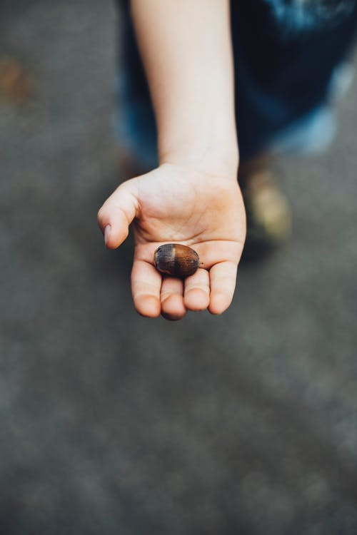 Person Holding Black and Brown Stones