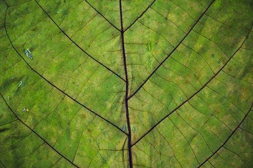 Foto d'estoc gratuïta de creixement, estampat, patró, primer pla