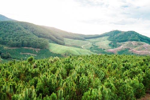 Photos gratuites de arbres, centrales, ciel, colline
