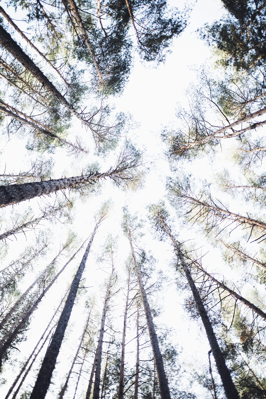 Gratis arkivbilde med lav-vinklet bilde, perspektiv, trær