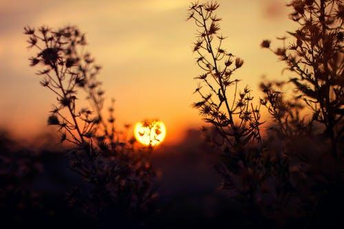 Gratis stockfoto met achtergrondlicht, bloem, dageraad, depth of field