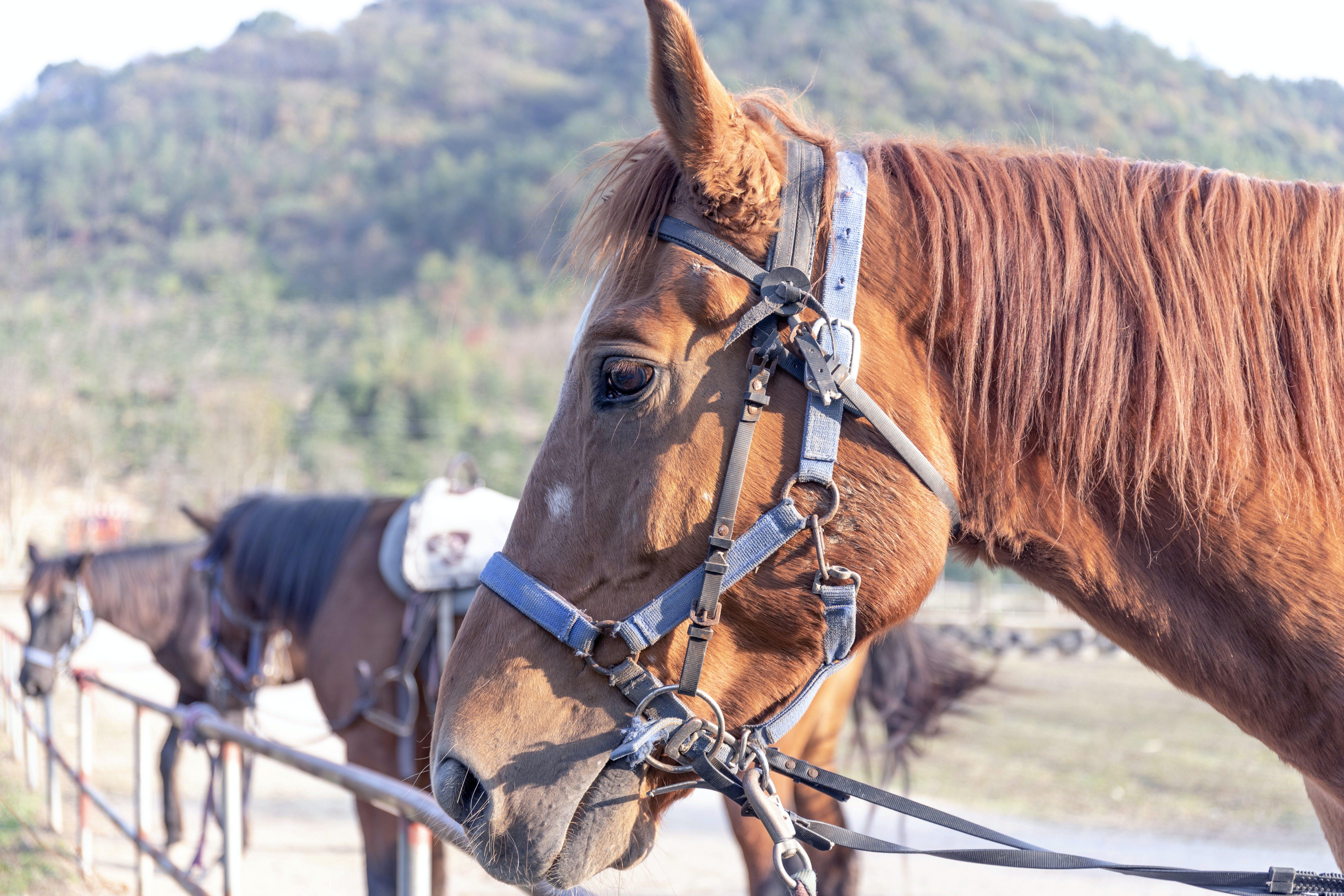 Free stock photo of animal, eye, horse, horse head