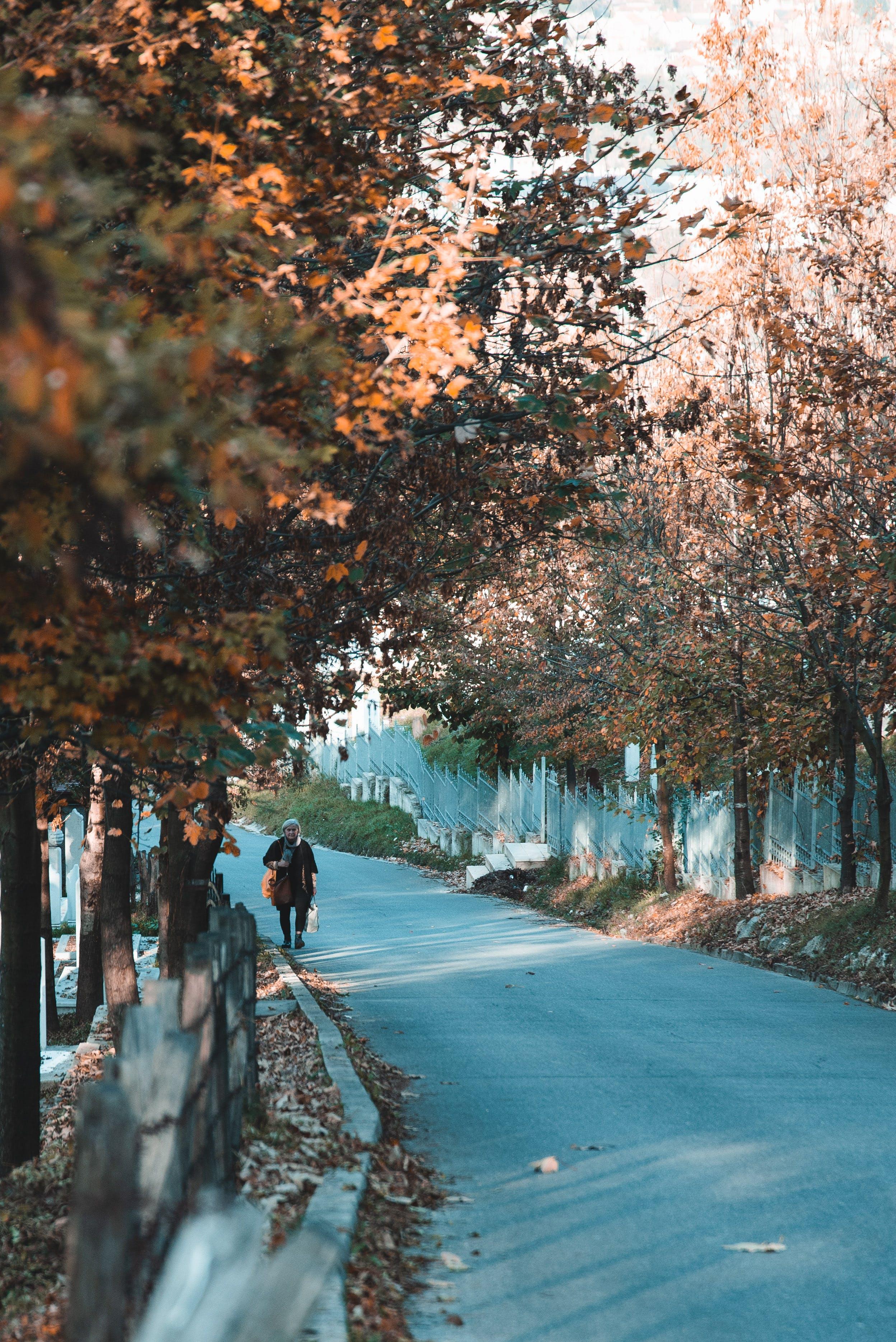 ağaçlar, çevre, gün ışığı, kişi içeren Ücretsiz stok fotoğraf