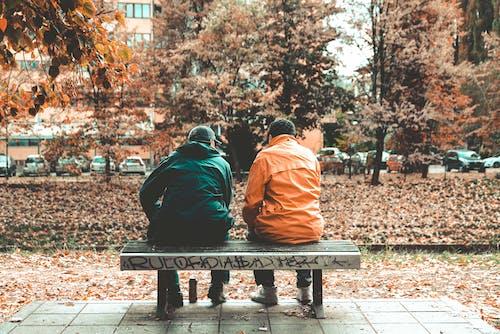 下落, 公園, 坐, 城市 的 免费素材照片