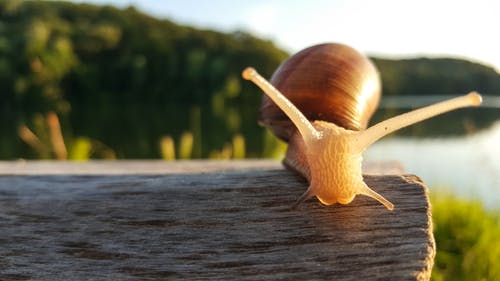 Close-up Photography of Brown Snail