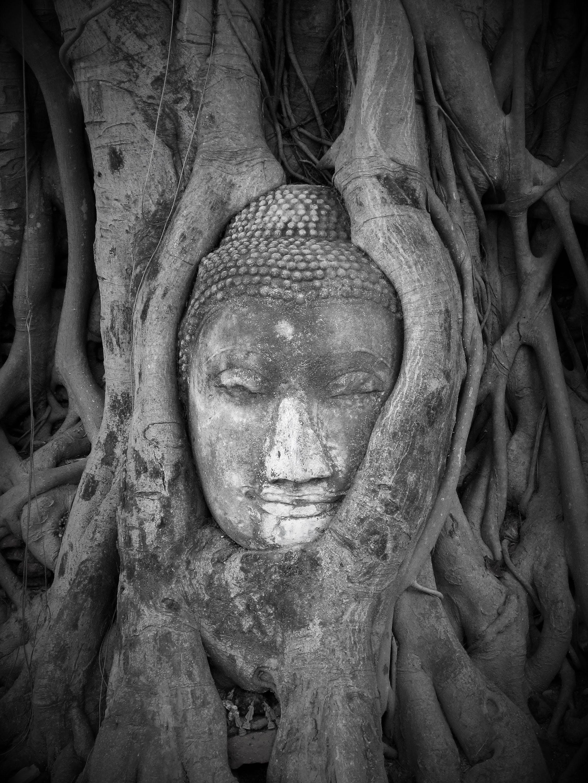 Kostenloses Stock Foto zu alt, baum, buddha, buddha-kopf