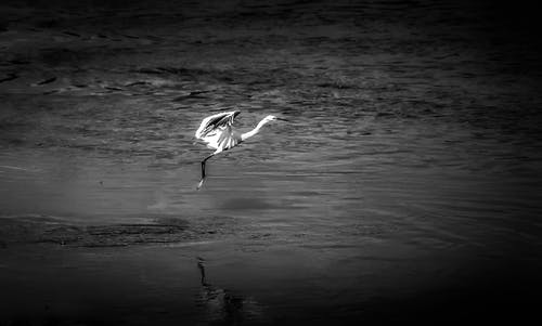 Imagine de stoc gratuită din #migratory