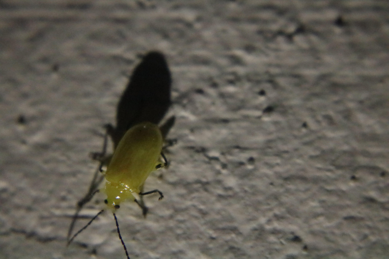 Free stock photo of animal, beetle, close up, dark