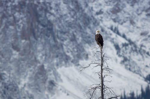 Eagle On Tree