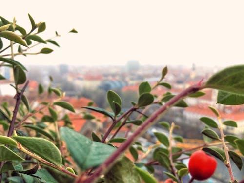 Foto stok gratis Austria, beri merah, kilang, kota