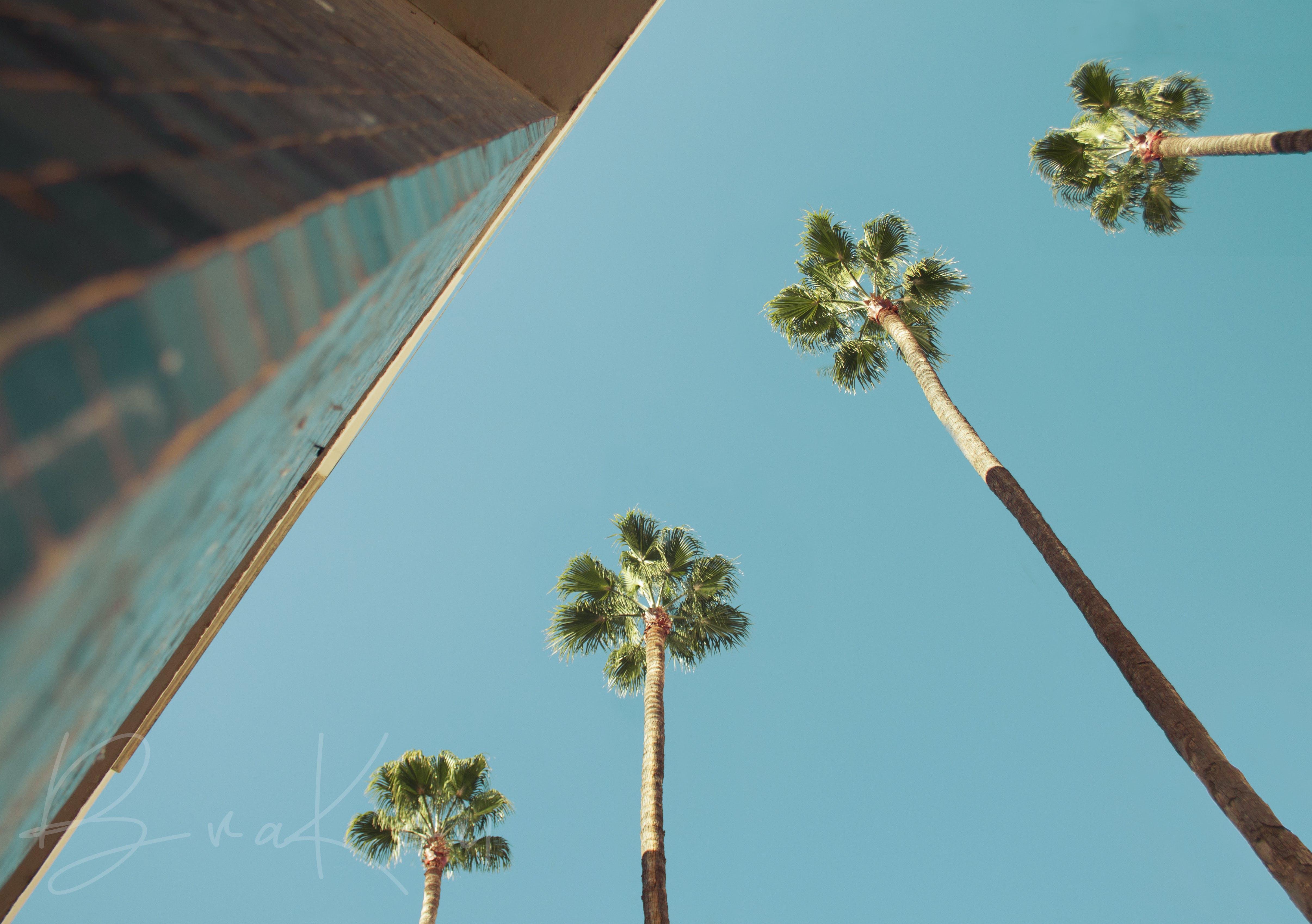 Gratis lagerfoto af blå himmel, dværgpalme, engle, gadefotografering