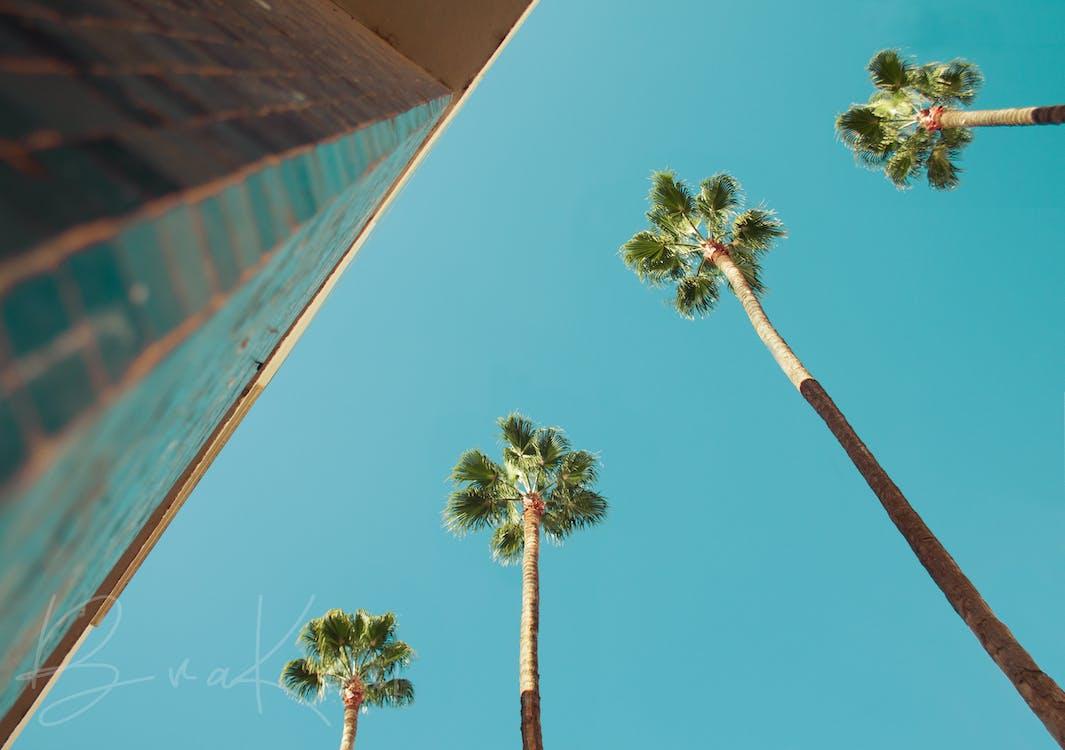 天使, 天空, 扇棕櫚