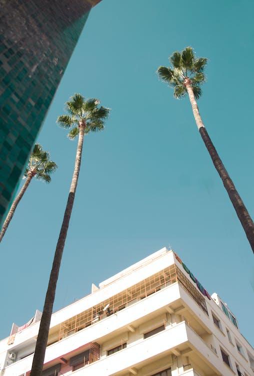 czyste niebo, drzewo palmowe, liście palmowe