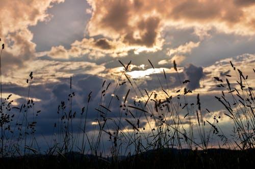 Free stock photo of clouds, corn, evening sun, field