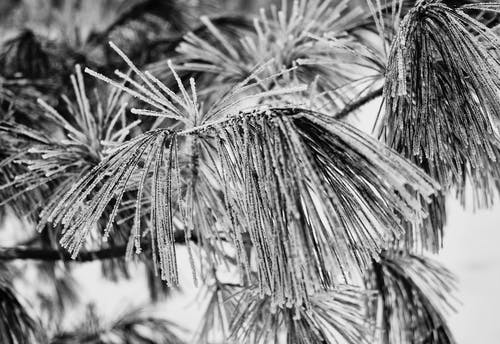 Free stock photo of cold, frozen, winter