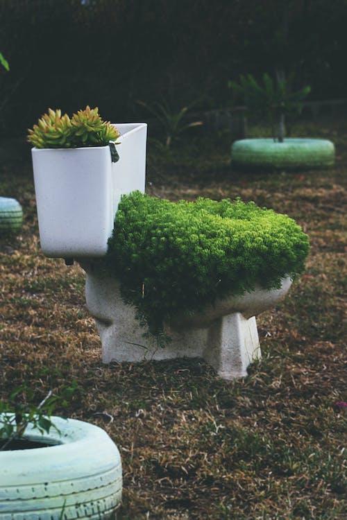 Foto profissional grátis de aumentando, aumento, planta, vaso sanitário