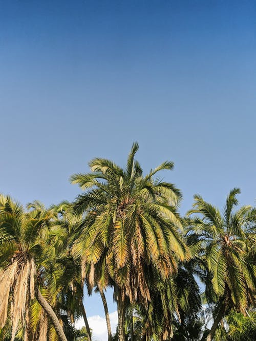 Photo of Coconut Trees