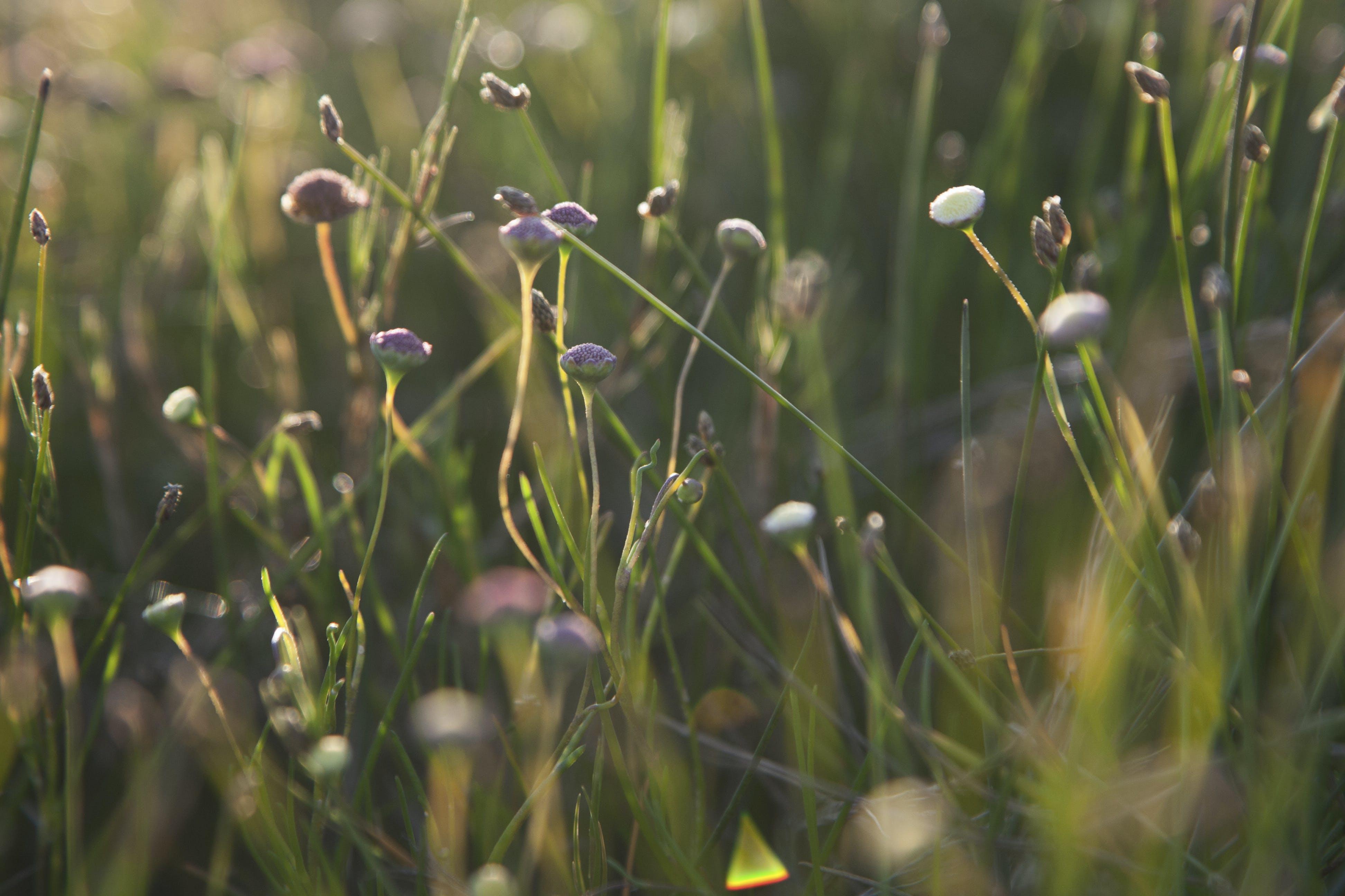 Free stock photo of dawn, flowers, grass, light