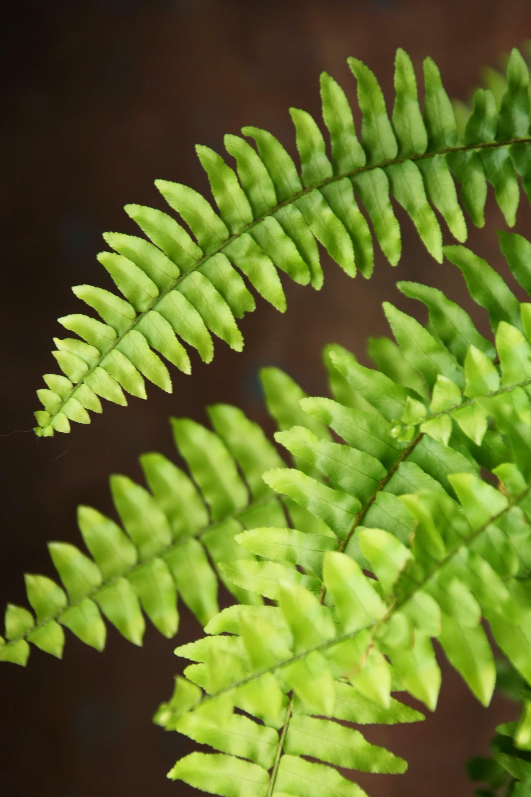 Kostenloses Stock Foto zu farnblättern, grüne blätter, natur, wald