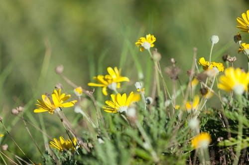 Fotobanka sbezplatnými fotkami na tému detailný záber, kvety, príroda, tráva