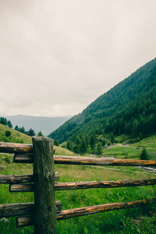 Free stock photo of conifers, countryside, fence, field