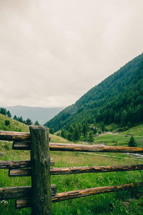 Fotobanka sbezplatnými fotkami na tému borovice, dedinský, exteriéry, hory