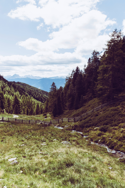 adventure, clouds, conifers