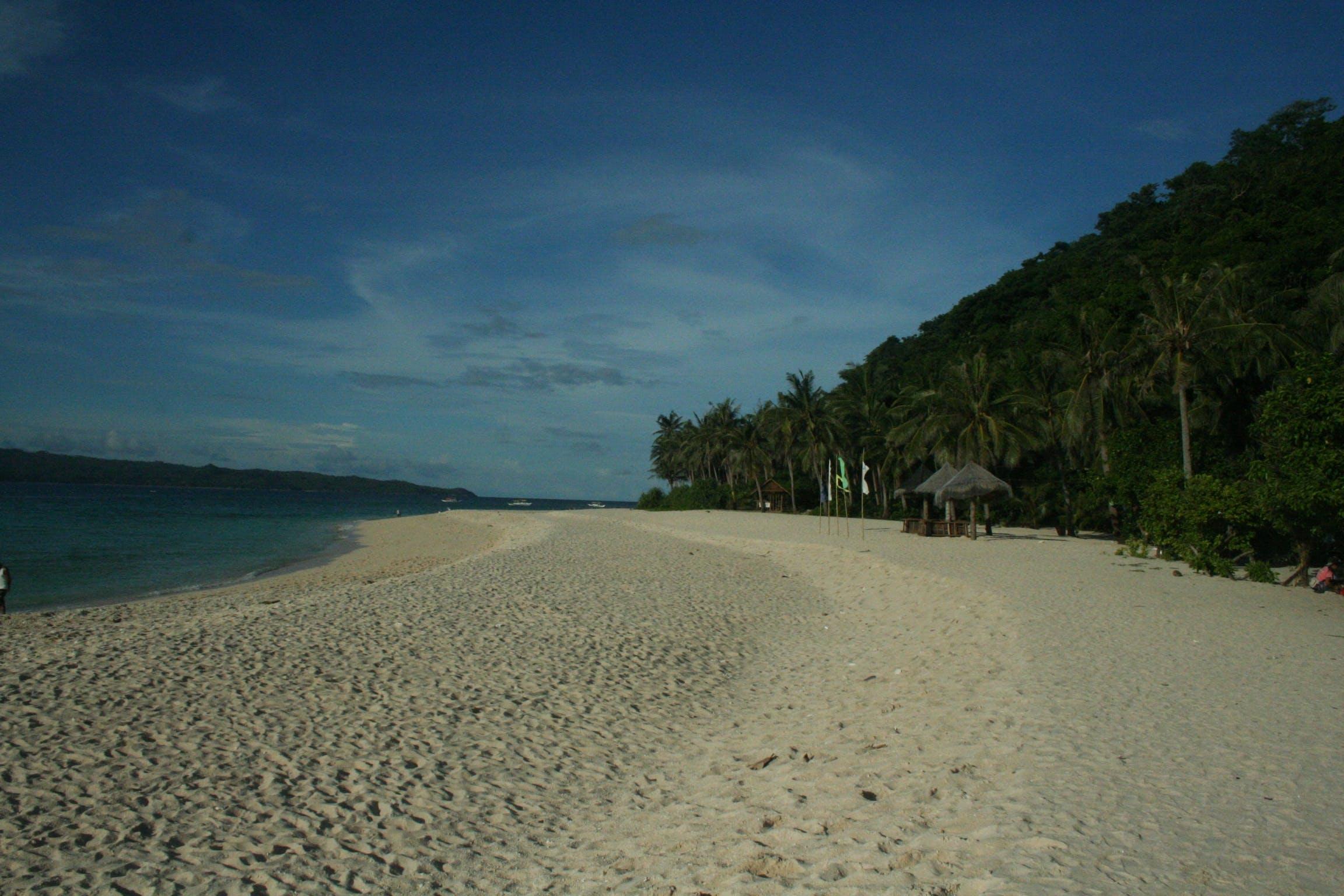 beach, blue skies, forest