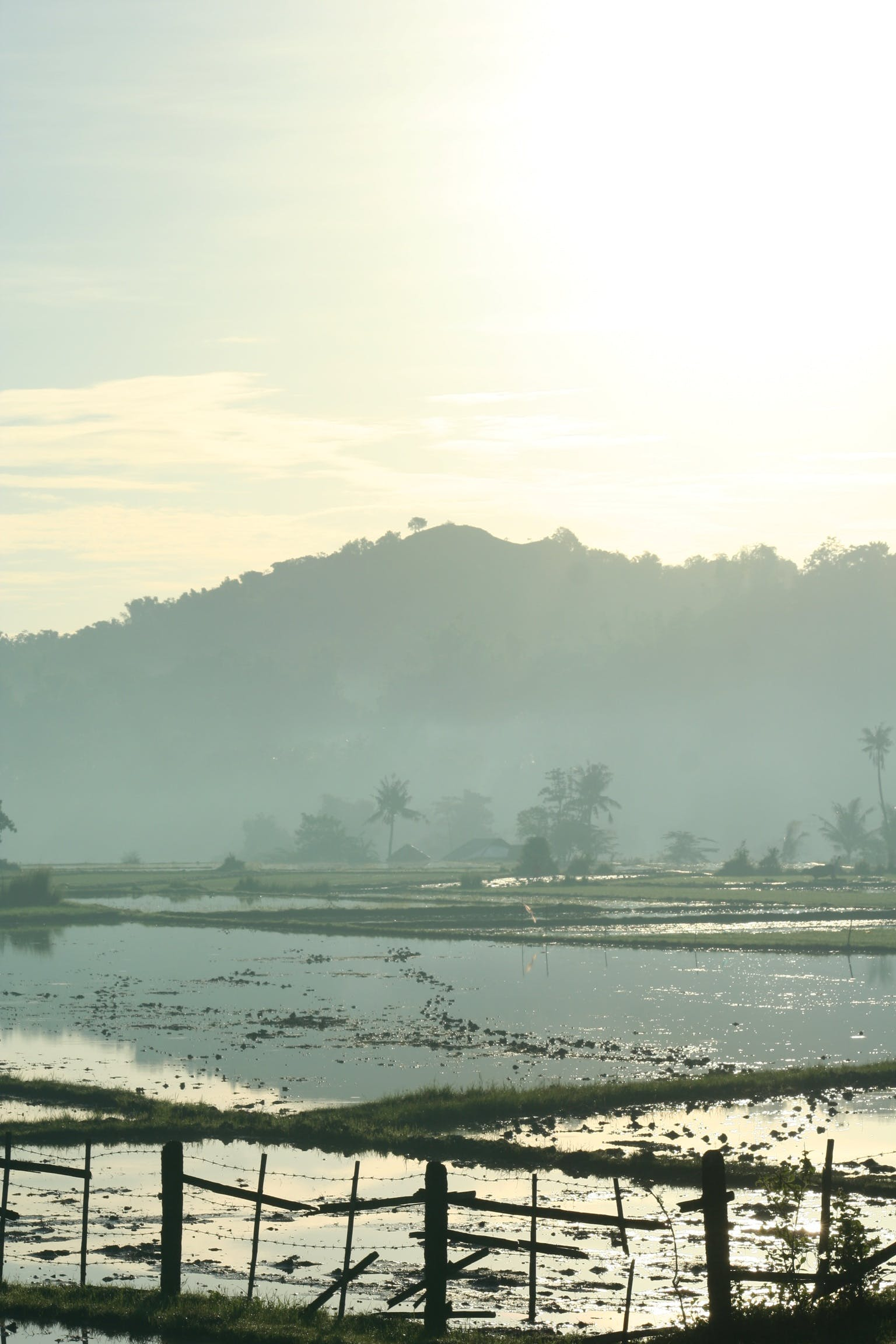 Free stock photo of forest, mountain, rice field, sunrise