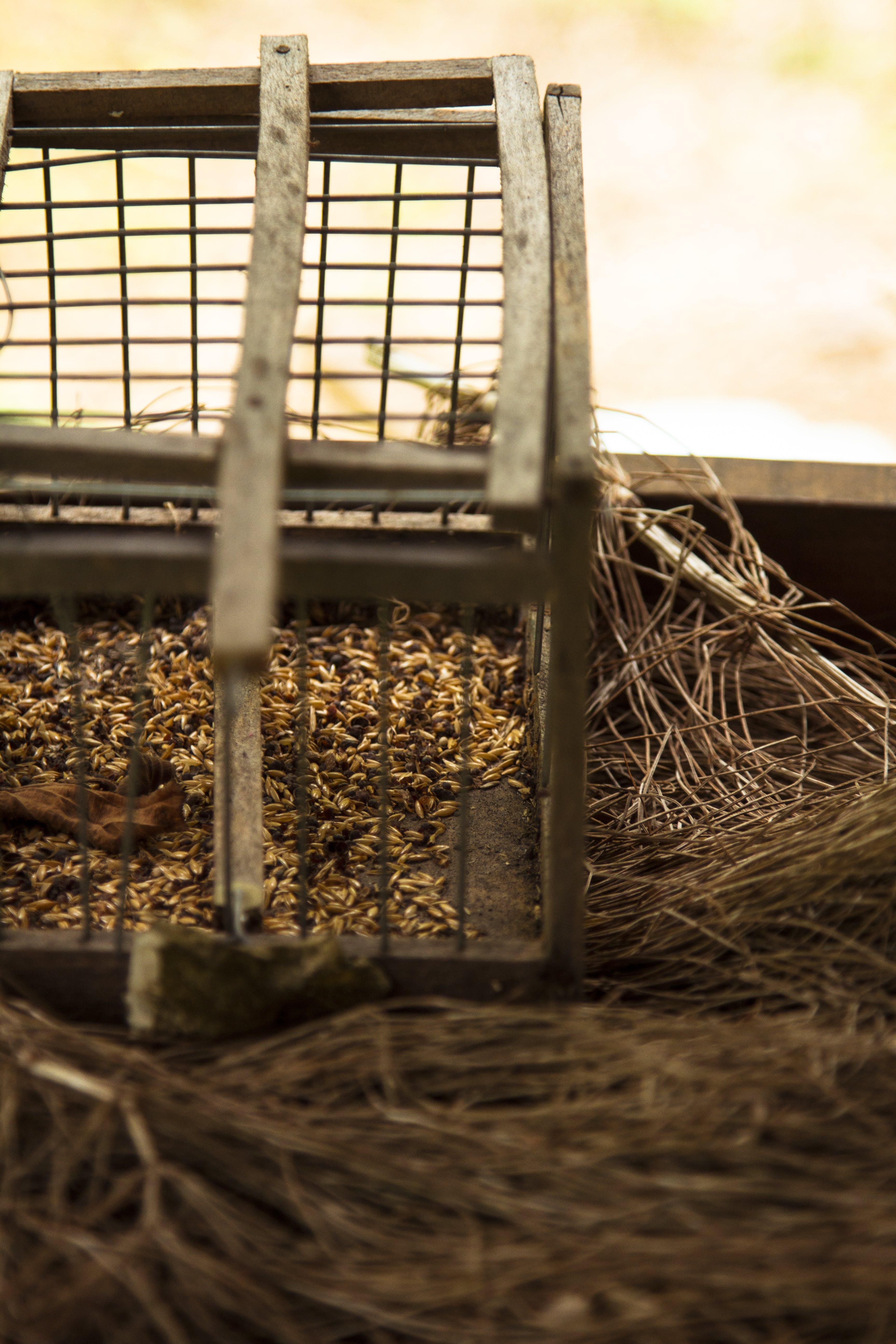 Free stock photo of autumn, autumn colours, birdcage, birdseed