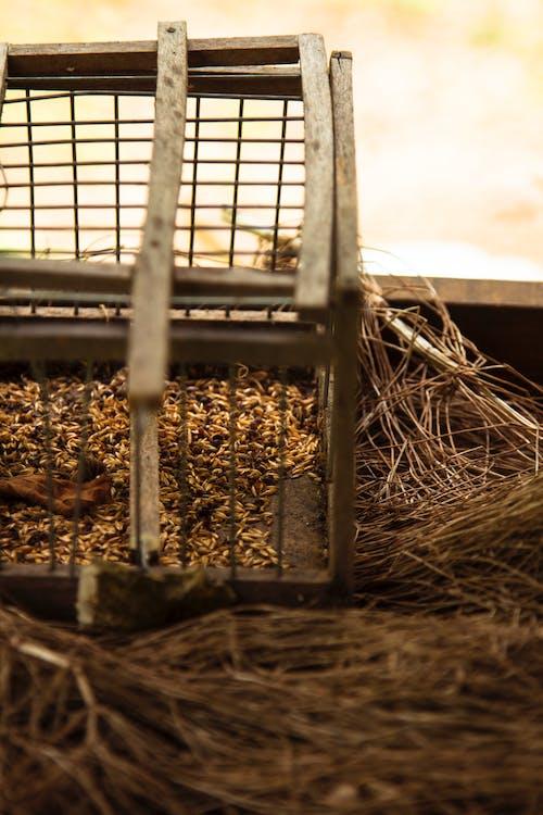 Foto d'estoc gratuïta de el llavor d'aus, gàbia