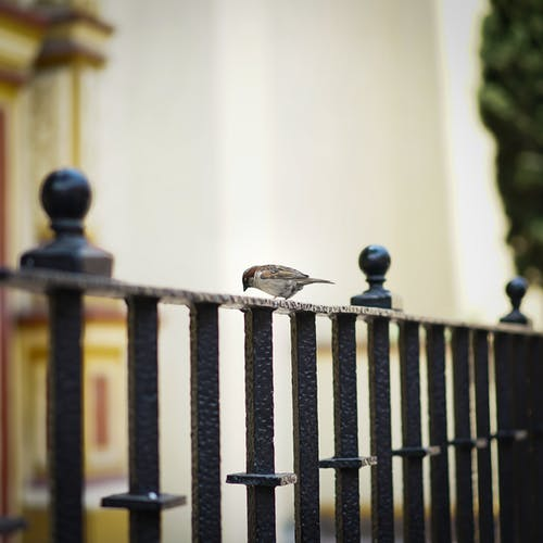 동물, 앉아 있는 새, 울타리, 참새의 무료 스톡 사진