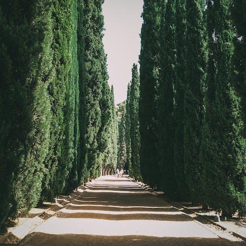 公園, 小路, 樹木, 環境 的 免費圖庫相片