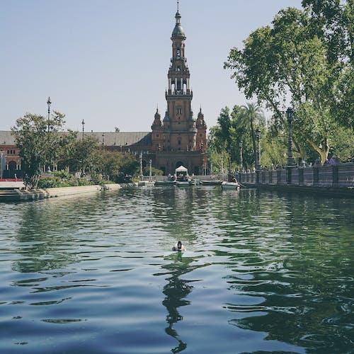 Fotos de stock gratuitas de agua, al aire libre, arboles, arquitectura