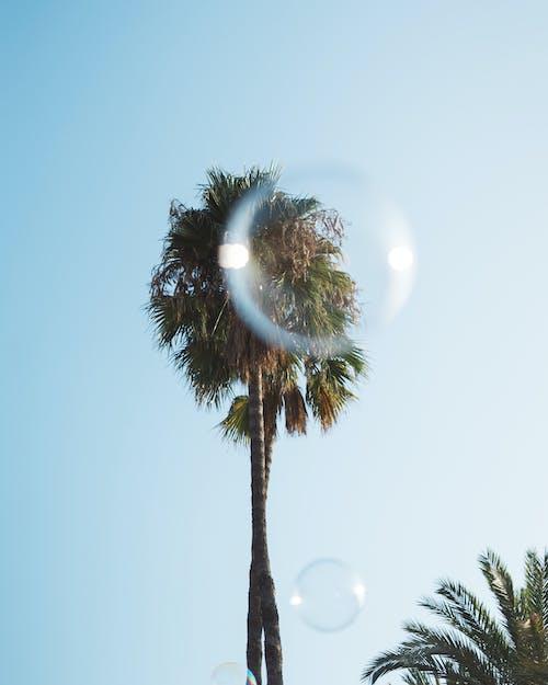 Безкоштовне стокове фото на тему «глибина різкості, дерева, кокосові пальми, небо»