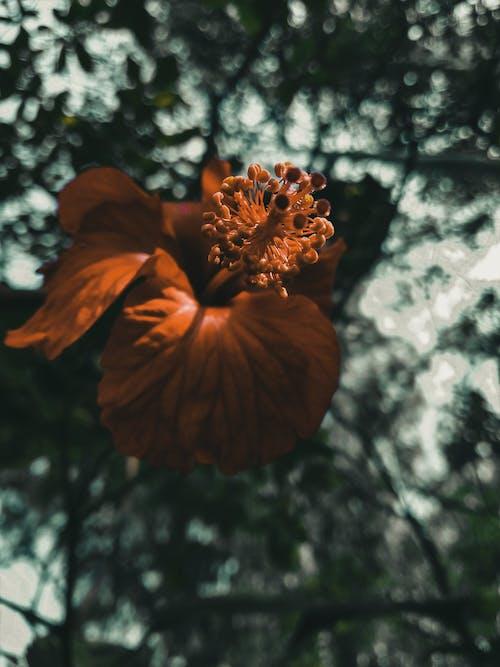 bitki örtüsü, Blurr, bulanık, bulanık arka plan içeren Ücretsiz stok fotoğraf