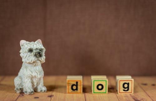 Foto stok gratis anjing, arca, binatang, dalam ruangan