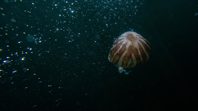 Základová fotografie zdarma na téma divočina, hluboký, moře, oceán