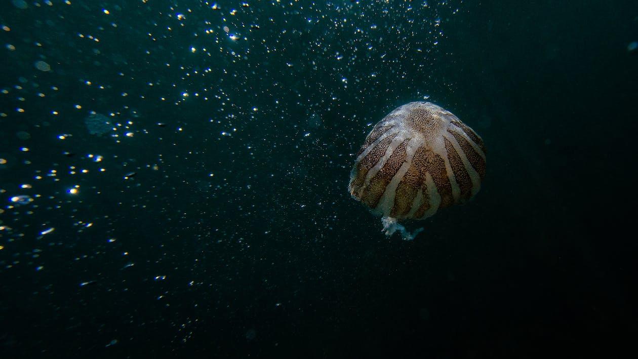 Photo Of Jellyfish