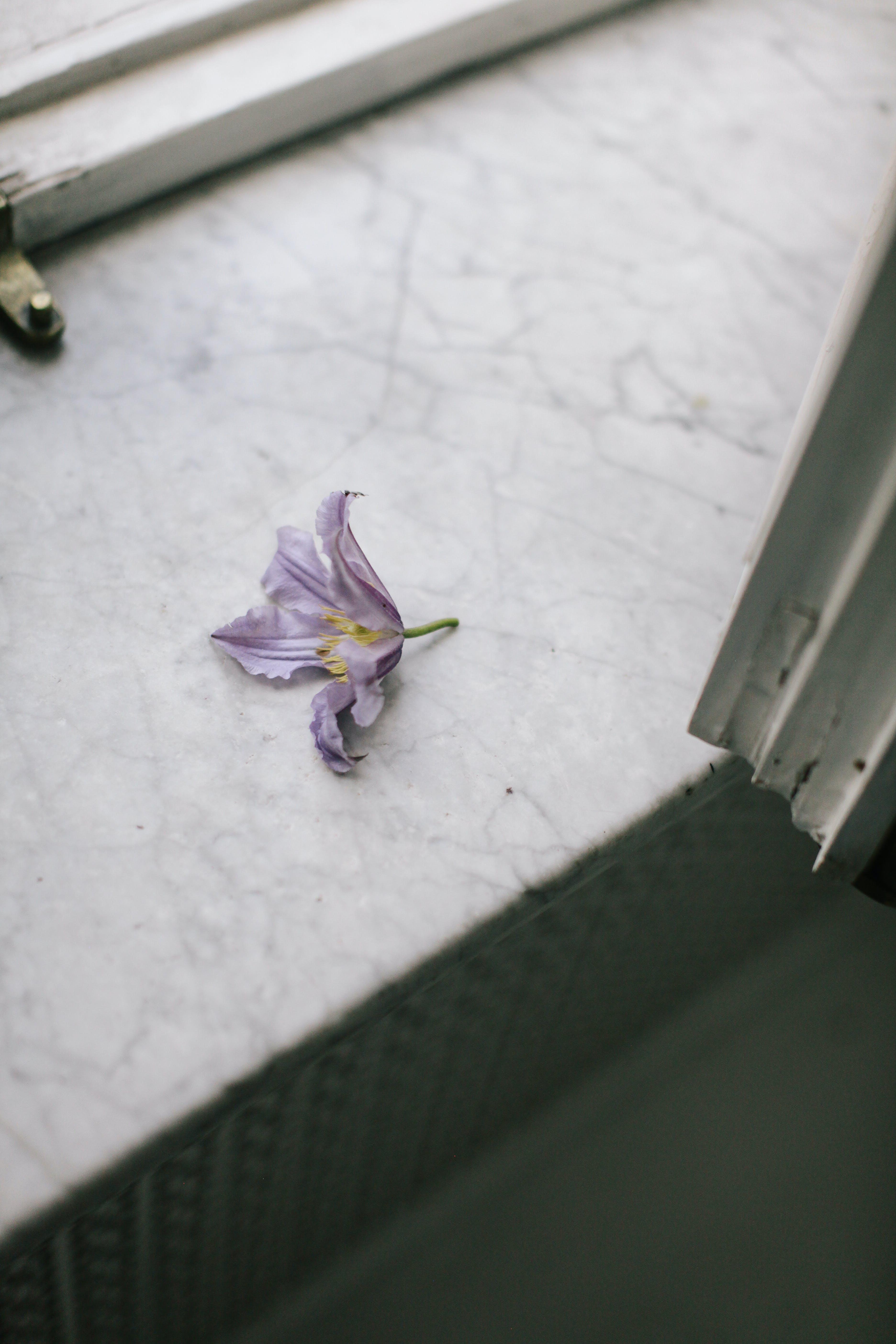 Gratis arkivbilde med blomst, blomsterblad, blomstre, flora
