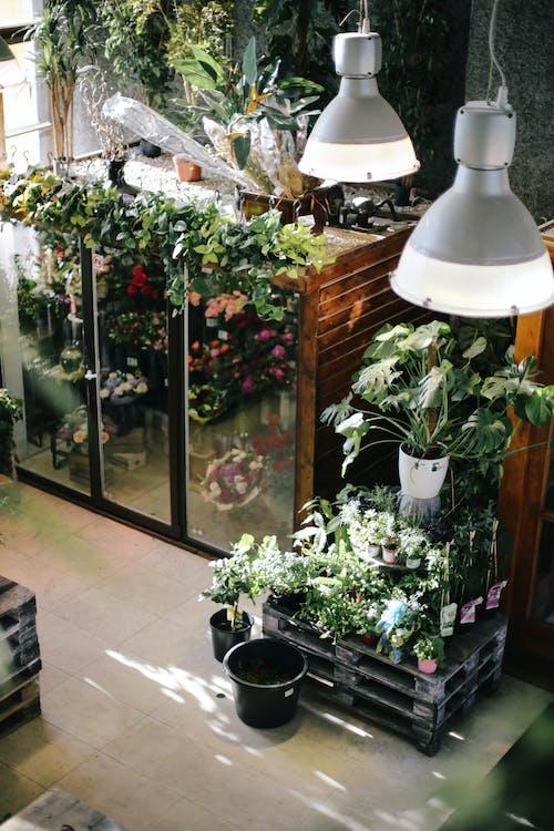 arkkitehtuuri, kasvihuone, kasvikunta