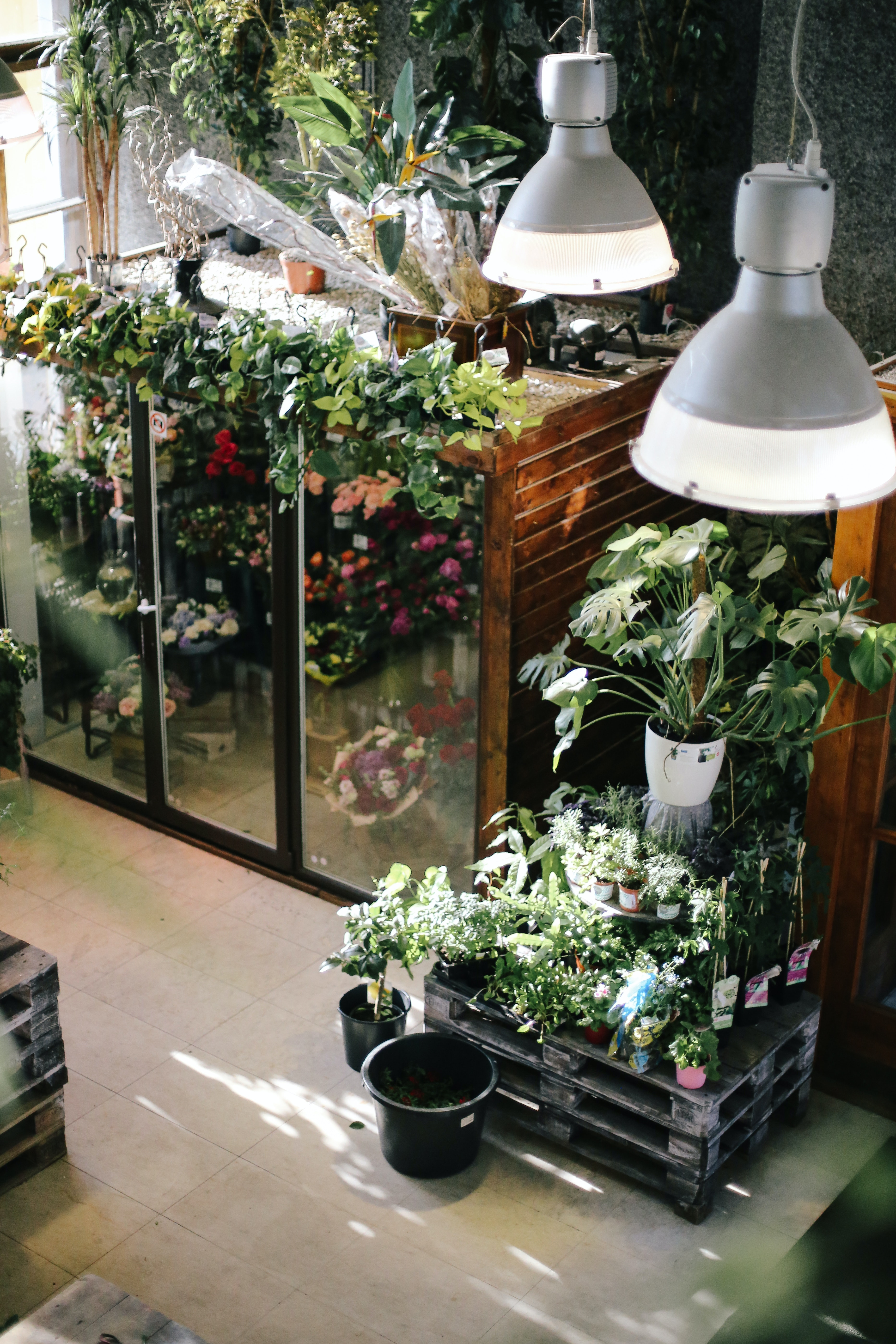 Free stock photo of flower shop, flowers, green
