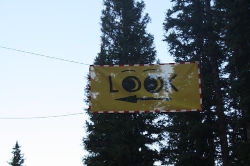 Photos gratuites de forêt, jaune