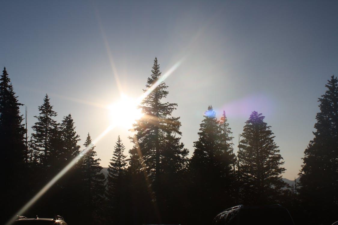 ліс, промінь сонця