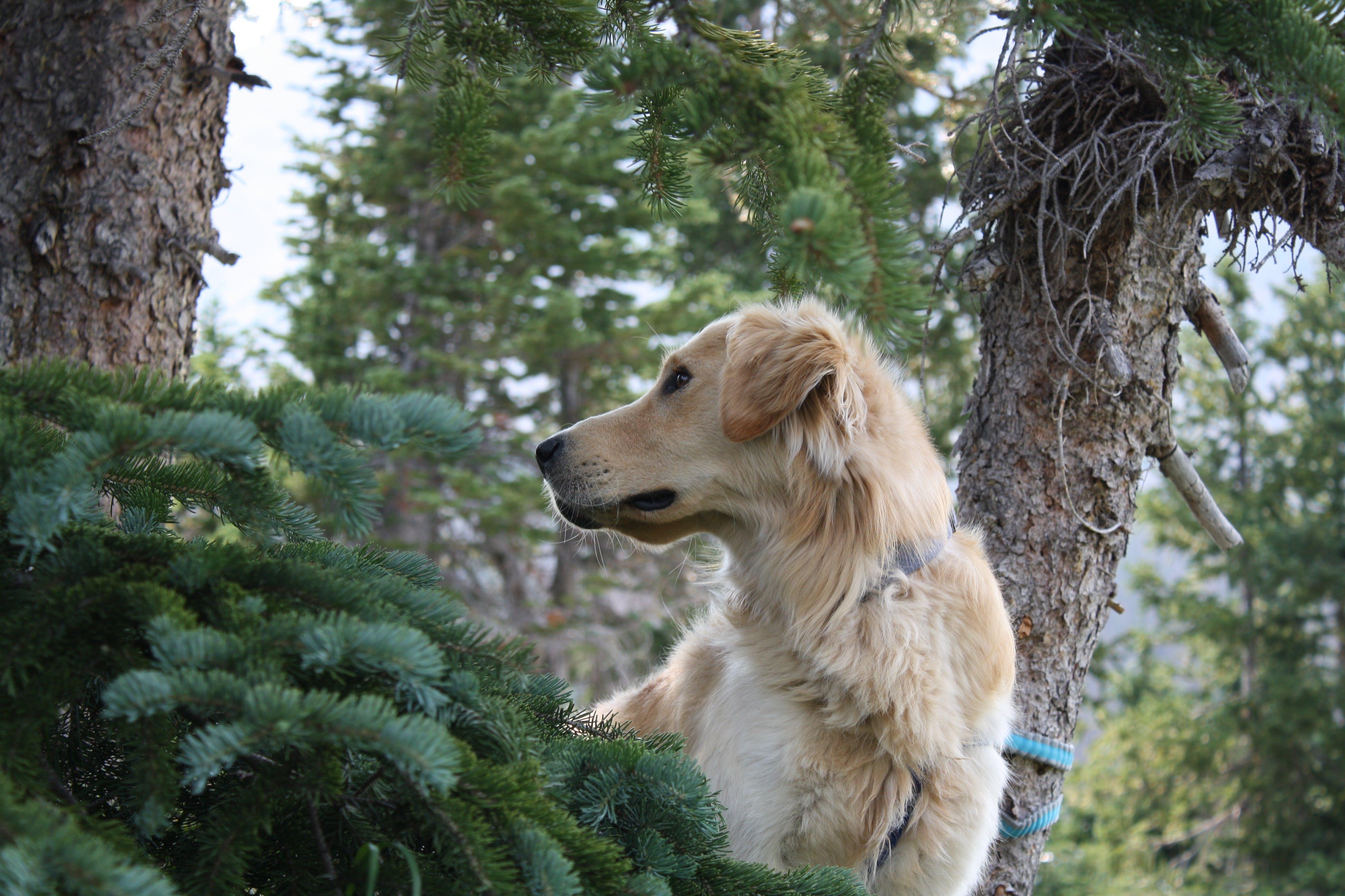 ağaçlar, bakmak, evcil, Evcil Hayvan içeren Ücretsiz stok fotoğraf