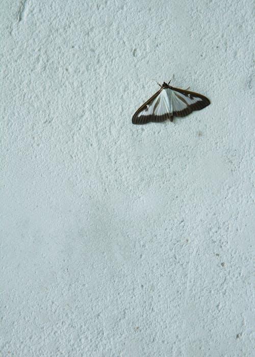 Foto d'estoc gratuïta de mur, papallona, parpali