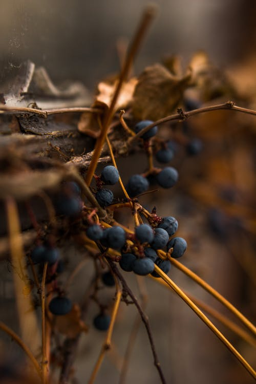 Gratis stockfoto met besjes, blurry achtergrond, close-up, fruit