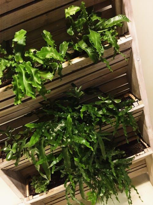 ダークグリーンの植物, 園芸植物, 屋内の植物, 植物の無料の写真素材